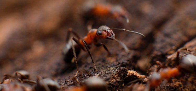 Get Rid Of Ants In Your Bedroom While You Sleep Thesnoozzz Com