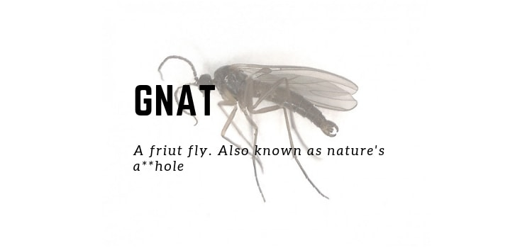 How To Get Rid Of Gnats In Your Bedroom