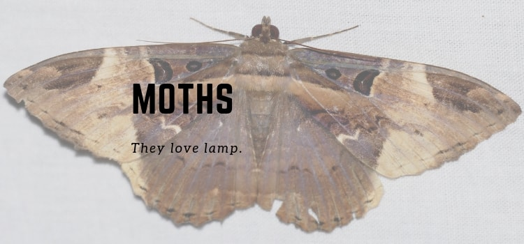 How To Get Rid Of Moths In Your Bedroom